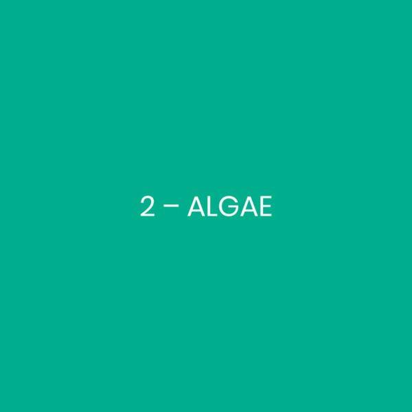 2 - ALGAE